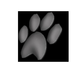 patte de chien a gauche